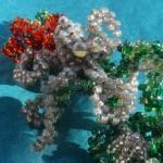 The Octopus' Garden bracelet