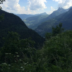 Wild flowers in the Alps and the valley below